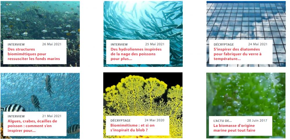 Les océans, une immense richesse pour le biomimétisme