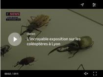 L'incroyable exposition sur les coléoptères à Lyon
